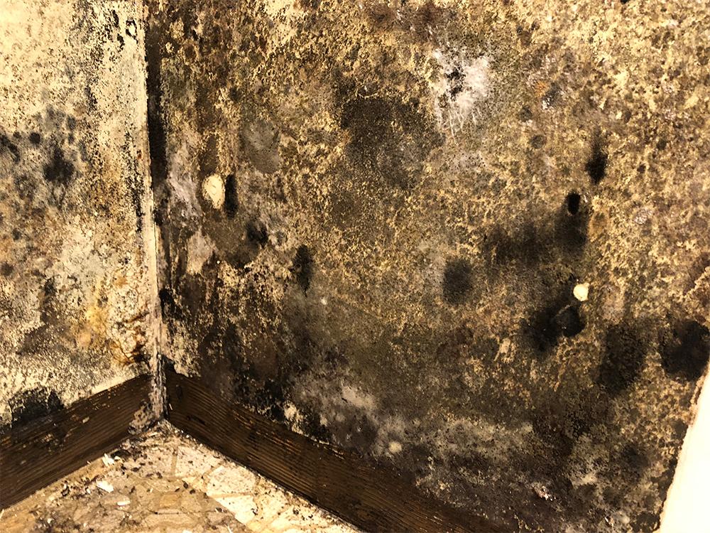 Mold Remediation | Charleston, WV.